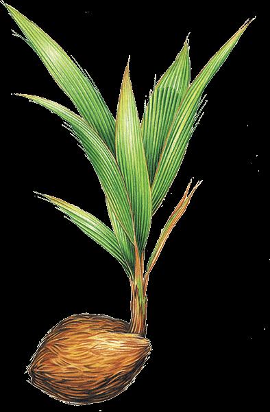 CP Plant